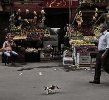 Egypt's police step in to combat potato shortage